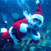 Thumbnail image for Does Obama have the Blues? Does Santa live underwater? Slow Whales, Good Props and more …