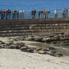 Thumbnail image for Open Letter to Judge Hofmann re: dispersal of the seals