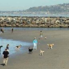 Thumbnail image for OB's Dog Beach Is a Model for Other Cities