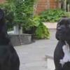 Thumbnail image for Local TV Report: Ocean Beach Vet-Tech Dog Owner Is Certain Her Dogs Were Poisoned