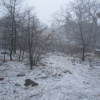 Thumbnail image for Looking for Winter in San Diego