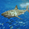 Thumbnail image for Annual Great White Shark Migration Along Pacific Coast Makes Scientists Giddy