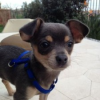 Thumbnail image for Puppy That Fell From Sunset Cliffs Will Be Ready for Adoption Soon – Apply Now.