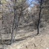 Thumbnail image for In Search of the Chariot Fire Burn on Mt. Laguna