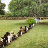 Thumbnail image for Lining Up to Piss on Filner's Political Grave