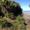 Thumbnail image for Ocean Beach Man Faces Felony Vandalism for Trimming and Cleaning City Bushes and Property by Pier