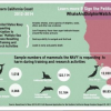 Thumbnail image for Environmental Group Sues Feds for Downplaying Harm to Marine Life With Sonar