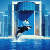 Thumbnail image for SeaWorld Attendance Drops Amid Blackfish Controversy