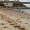 Thumbnail image for Red Crabs in OB