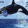 Thumbnail image for Sign the Petition to Stop Nightly Fireworks at SeaWorld