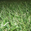 Thumbnail image for San Diego Gardening: How to Ditch the Lawn