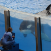 Thumbnail image for Orcas Need the Ocean, Not a Bigger Box!