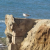 Thumbnail image for Vandalism, Erosion and Repairs at Sunset Cliffs Natural Park