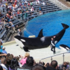 Thumbnail image for SeaWorld San Diego to Phase-Out Orca Circus Shows