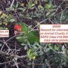 Thumbnail image for OB Town Council: Wild Parrots and Infrastructure – Wed., Mar. 23rd