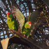 Thumbnail image for Wild Parrot Community Forum in OB – Monday, April 11th