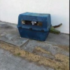 Thumbnail image for Canine Cruelty in Ocean Beach: Dogs Left in Crate in Alley – Rescued by Locals