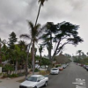 Thumbnail image for City to Remove Monterey Cypress Tree on 4800 Block of Del Mar in Ocean Beach