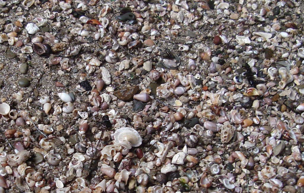Tiny shells carpet the cave bottom