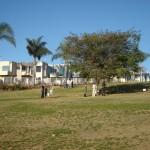 Condos Abutt Orpheus Park