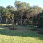 New Trees on the Perimeter