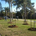 New trees at Orpheus Park