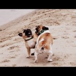 objenresevoir-dogs