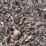 A carpet of shells