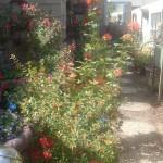 Hidden Garden 4