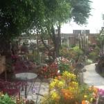Hidden Garden 6