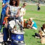 Canine Car 06