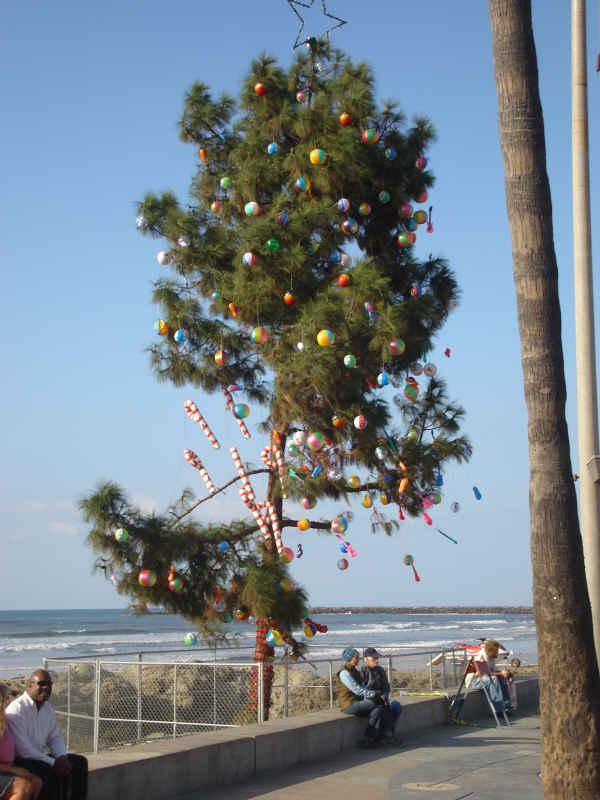 Christmas Tree 2009 001-sm