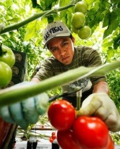 mexican-migrant-worker-