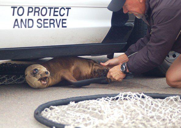 sea lion pup jg 02 5-5-10 sm