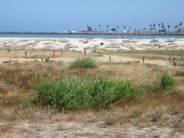 OB dunes