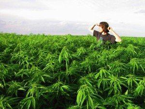 legalize-marijuana-california-environment-1227