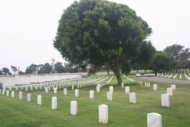 ft rosecrans trees 01