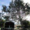 Torrey Pine trim 1-26-11 011-sm
