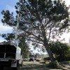 Torrey Pine trim 1-26-11 013-sm