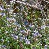 desert-flowers-093