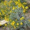 desert-flowers-101