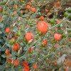 desert-flowers-106
