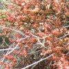 desert-flowers-118