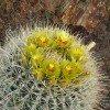 desert-flowers-123