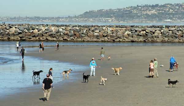 Dogs On Beach Auckland
