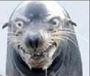 seal angryseal