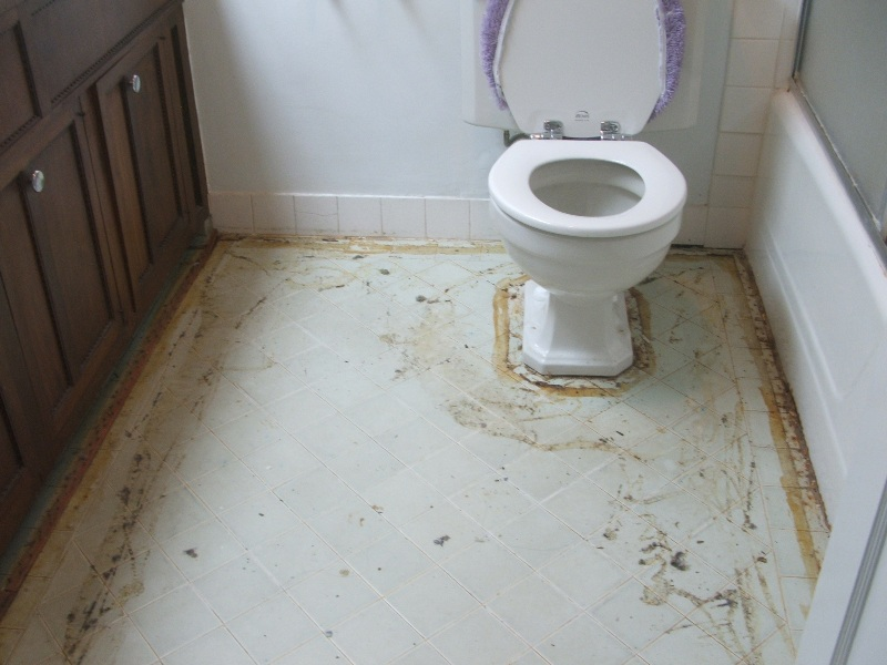 . The Widder Curry Asks  When the toilet overflows  is it a  flood