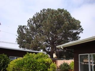 OB Torrey Pine 4300 blk Orchard mc