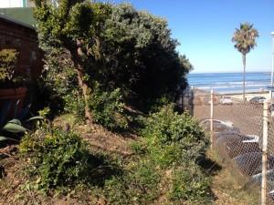 Adame bushs 01 small