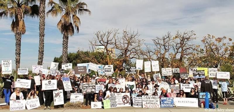 Seaworld protest 1-19-14